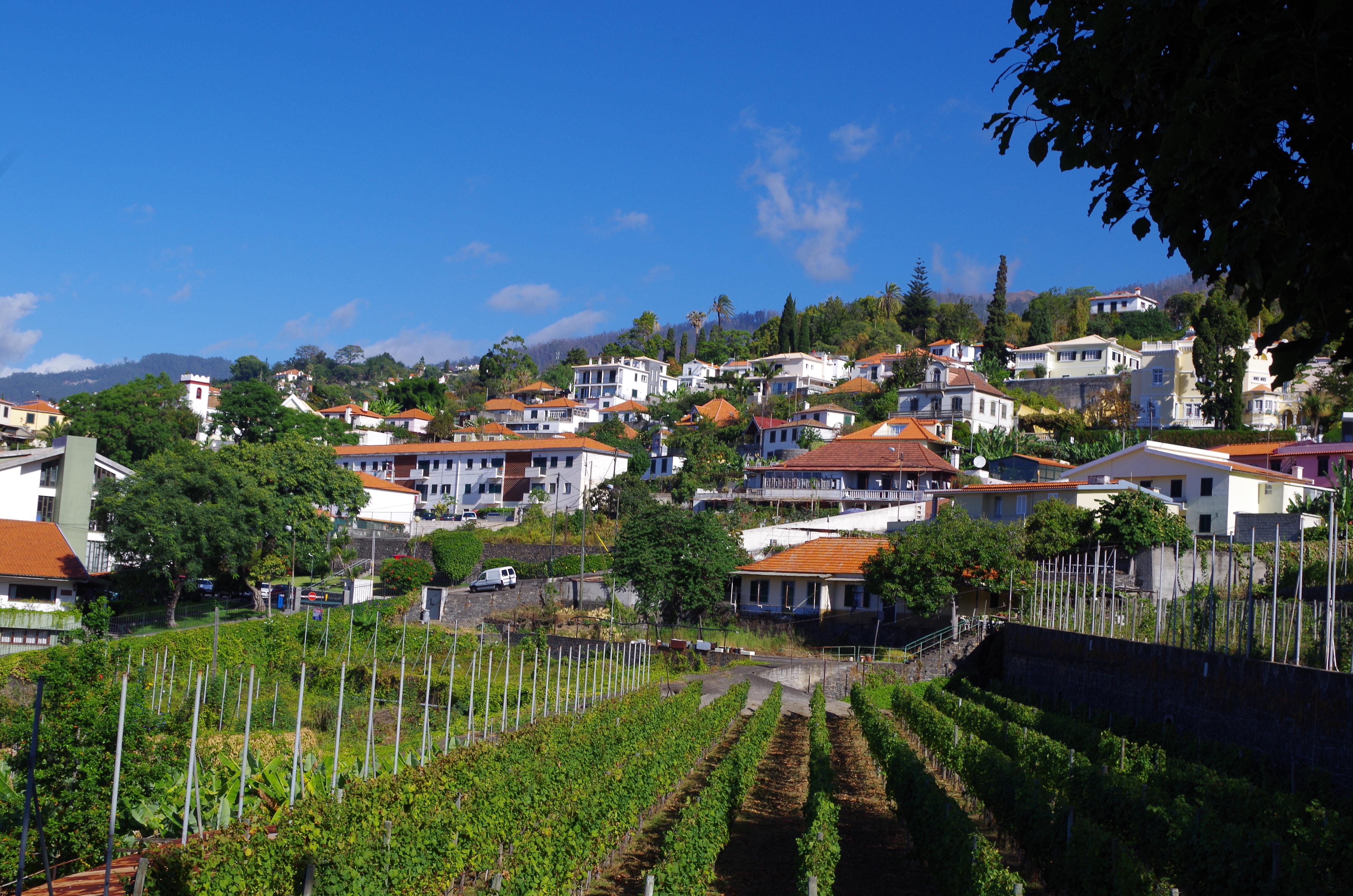 Vineyard in Funchal
