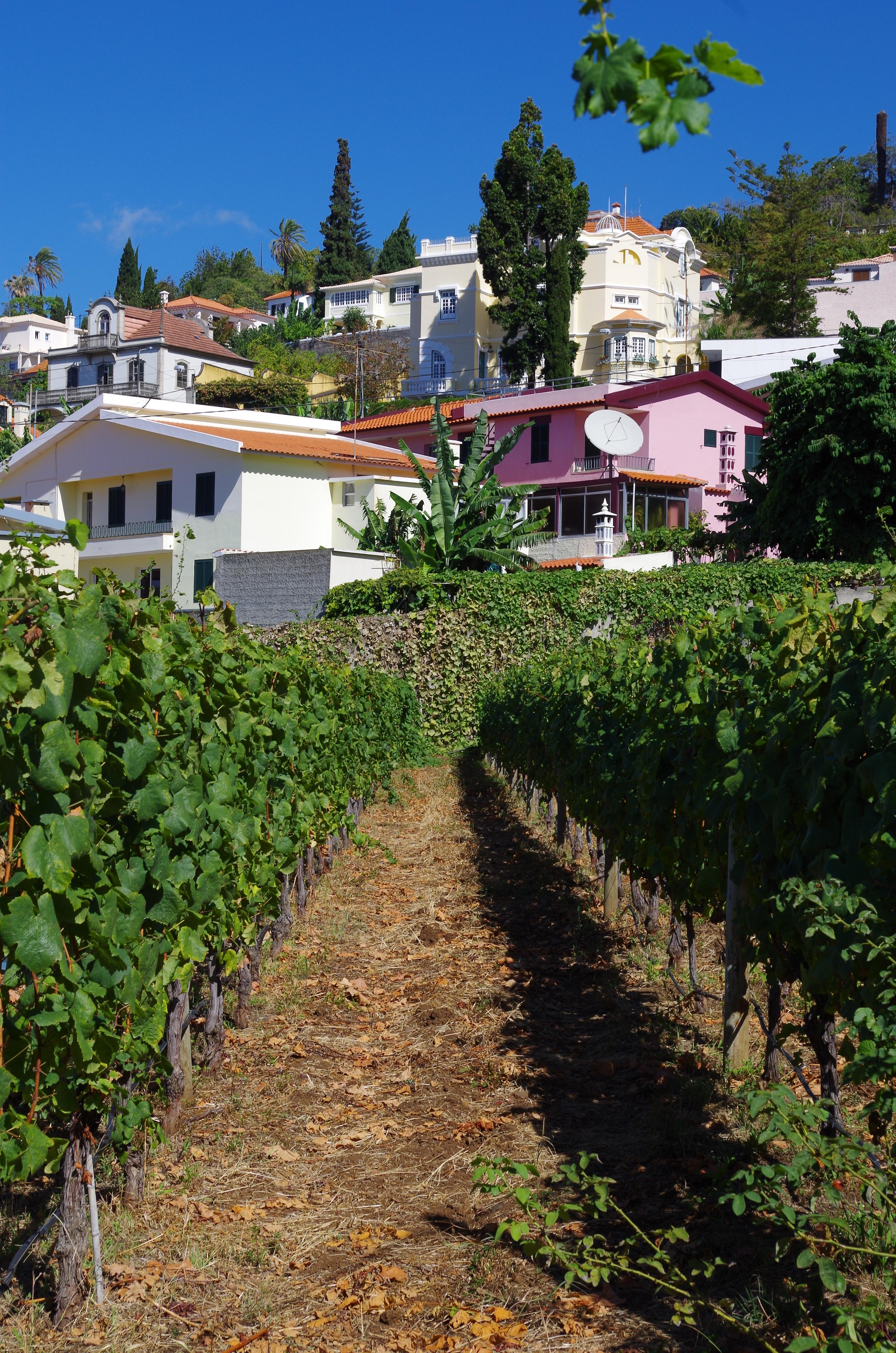 Blandy family vineyard in Funchal