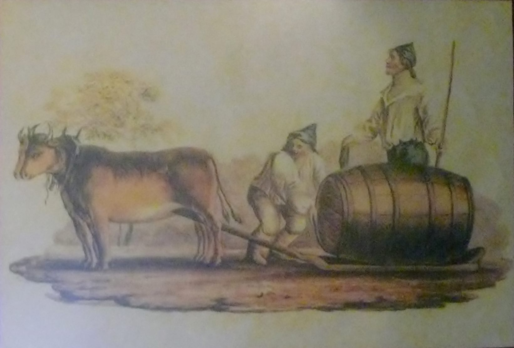 Madeira barrel on an oxen sled