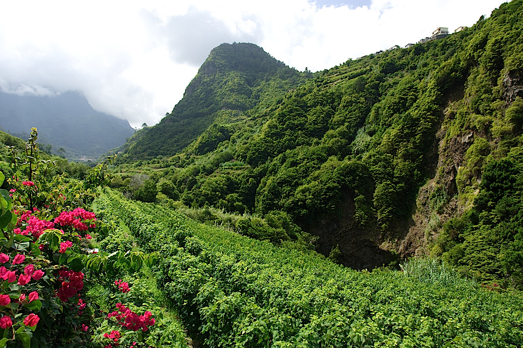 Vineyards in the interior of Madeira (Blandy's)