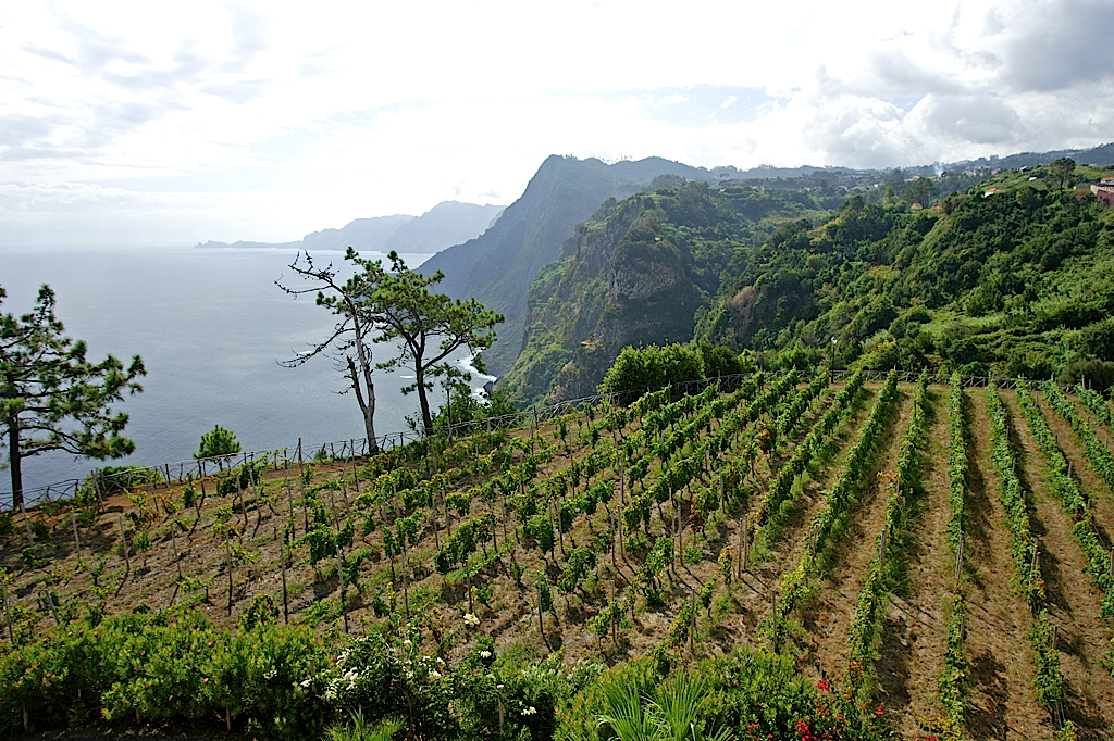 Madeira vineyards on the north coast