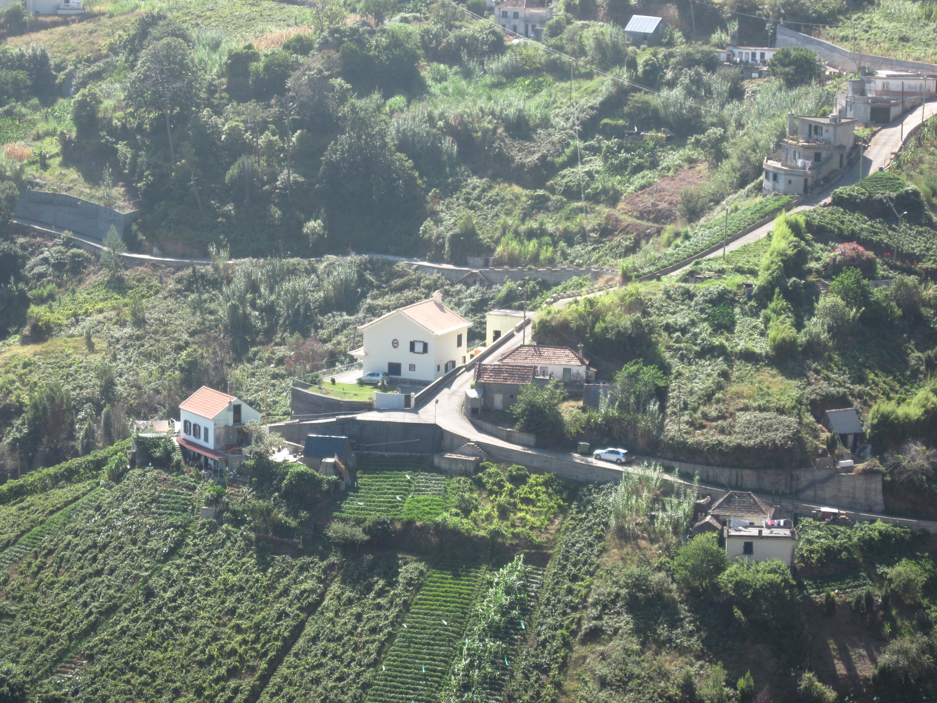 Madeira farming landscape