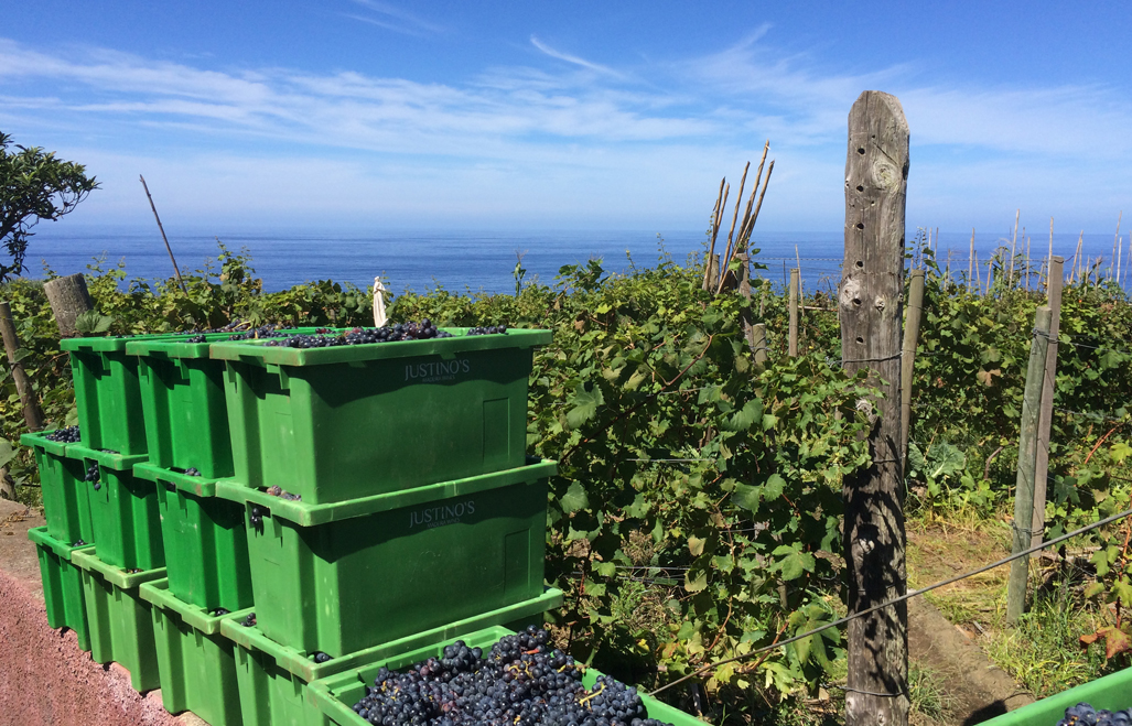 The grapes have been harvested